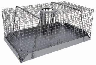 Rodent at Your Workplace? Try Rodent Traps
