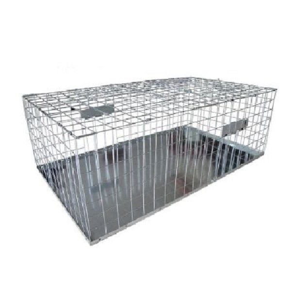 Pigeon trap foldable humane